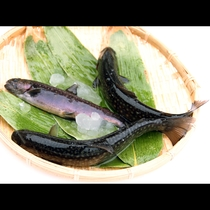 名物のイワナ料理は、活岩魚を使い、直前に捌きます。新鮮で臭みのない味わいをお楽しみ下さい。