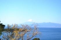 富士山新芽とともに