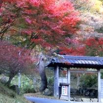 秋のうつくしい紅葉