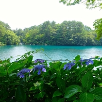 初夏の五色沼