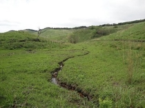 細野高原の湿原