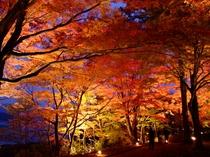 山中湖 紅葉祭り