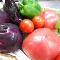 *[地物新鮮野菜]お子様にも安心して食べていただけるよう、食材を吟味しております。