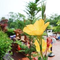 *[お庭]季節ごとの色とりどりのお花がお出迎えします。