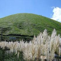 *[大室山/車で7分]秋の大室山はススキの銀穂に包まれます。