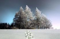 厳冬期の車山