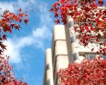 ホテルと秋に色付く木々