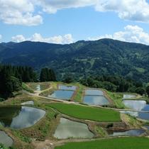 山古志の棚田・棚池 写真愛好家の人気スポットでもあります。(車で40分)