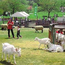 東山ファミリーランド  雄大な自然のもと、自然とふれあい季節と遊べる家族の広場です。(車で15分)