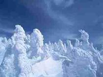 横手山、樹氷。1月中旬ごろから。
