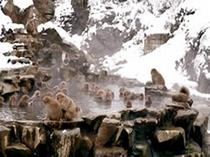 snow  monkey ! 12/20~3/31、外国人でイッパイ!