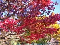 平和観音公園の紅葉