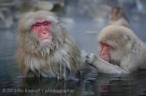 お猿さんの温泉入浴適温は、36℃位です。