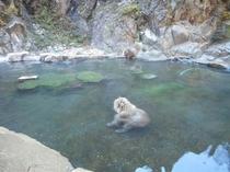 お猿さん、湯加減はいかがでしょうか、、、?。