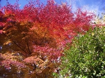 当館庭園  紅葉