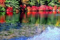 白駒池里山