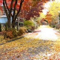 *【景観】秋になると色鮮やかなモミジやイチョウの木に目を奪われます。