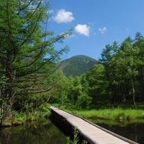 ○観光 御泉水自然園桟橋