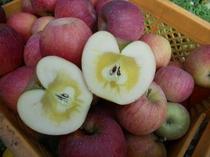 蜜入り ふじりんご