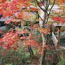 木の湯(秋)