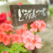 ホテル中庭にはつつじなど可愛いお花もたくさん咲いておりますよ。