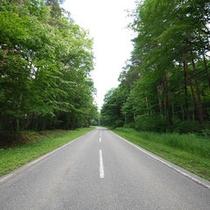 緑に囲まれた道路で快適なドライブがお楽しみいただけます♪