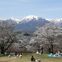 【大町公園】残雪の北アルプスと桜の美しい光景