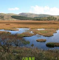 秋の八島湿原