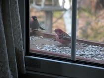 窓辺に来る野鳥