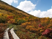 秋の八方自然研究路