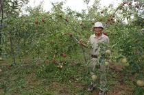 信州産果実 あんず、りんご、プルーン、ブルーベリーなど農園から直接仕入れてます