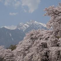真原(さねはら)の桜並木プラン用