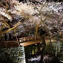 高遠夜桜プラン用500-1
