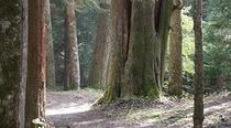ドラマ「ゴーイング マイ ホーム」に登場した「クーナの森」