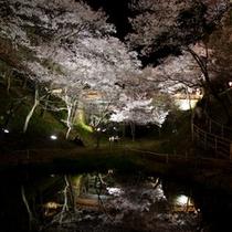 高遠夜桜プラン用500-2