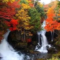 色とりどりの紅葉の景色は感動ものです。竜頭の滝