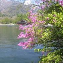 湯ノ湖・トウゴクミツバ
