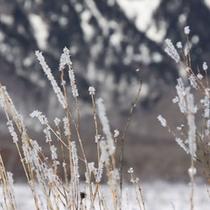 戦場ヶ原の霧氷。写真好きの人なら一度は撮りたい風景です。