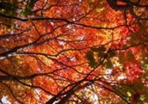 紅葉のシーズン