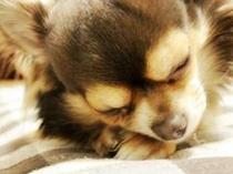 """豊かな自然の中で大切な家族""""愛犬""""と一緒に寛げる♪"""