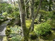 初夏の庭2