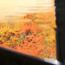 ☆温泉に映える紅葉 見事な色合いです