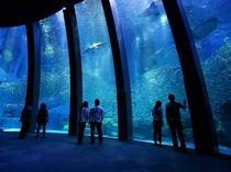 アクアミュージアム・大水槽(横浜八景島・シーパラダイス)