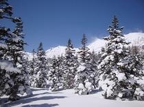 スノーシュー・ハイキング