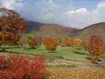 秋の紅葉がすばらしい。
