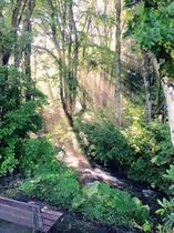 庭の渓流とベンチ