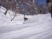スキー(宝台樹)