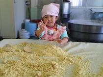 味噌造り 大豆をミンチにして冷まします