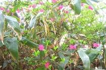 高山植物1-4x6