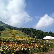 嬬恋・鹿沢ゆり園